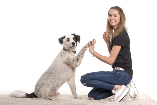 Hundeerziehungshalsband Antibellhalsband