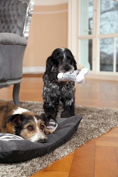 Prinz hunde kuschelknochen spielzeug hundekissen